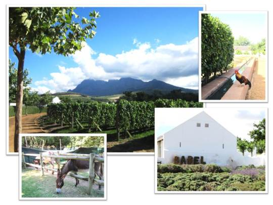 Cape Town 4